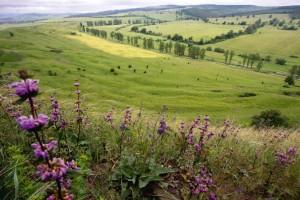 Pe dealurile României, florile de câmp spun povestea oamenilor şi istoria hranei