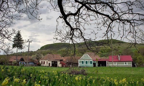 ciubotica