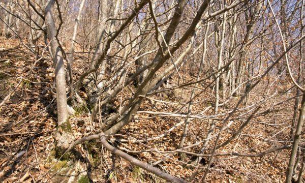 """Tipul de tăiere """"în crâng"""" ajută pădurea să întinerească şi îi ajută pe oameni să aibă lemne. Numai că ea nu se mai practică decât rareori şi numai în România"""