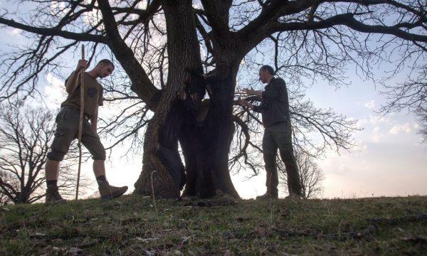 arbori main stg-horz