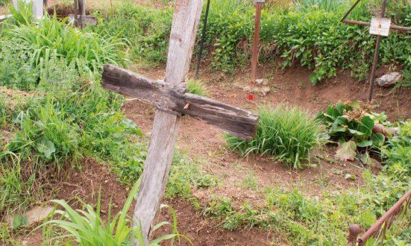 cruce dubova
