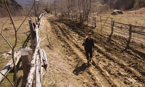 drumul spre poiana cozanei