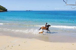 Una dintre superbele plaje caraibiene – Vigie