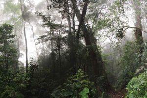 Pădurea Atalntică
